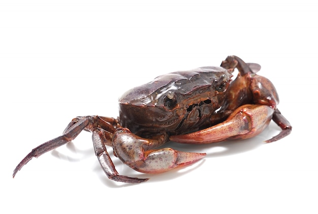 Crab isolated isolated