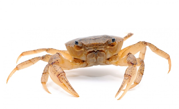 Crab isolated