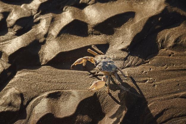 해변의 젖은 모래에 게