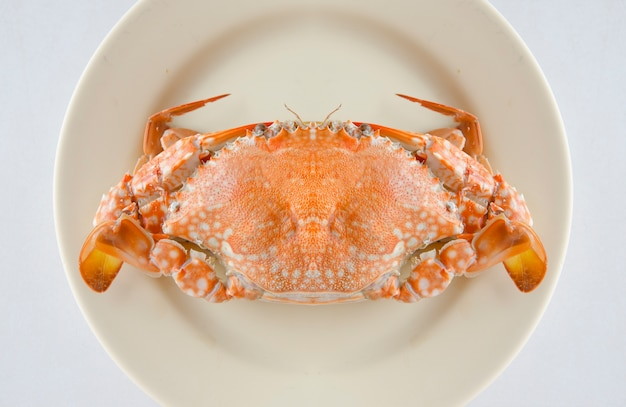 A crab on plastic plate background with clipping path