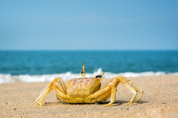 Crab running across the sand on the beach
