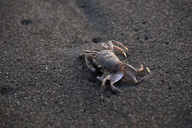Crab on sand beach during summertime