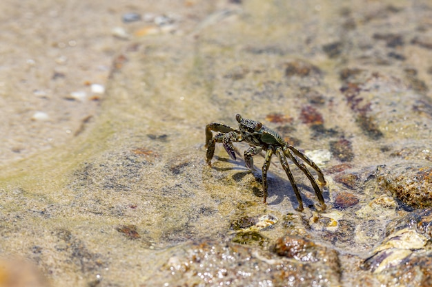 Crab walking in water sand