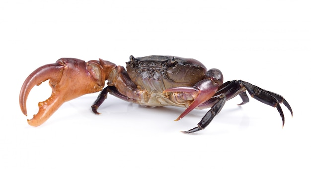 Crab on white wall