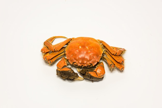 Crab with claws on white background