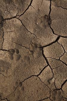 Трещины грязи фон с собакой след