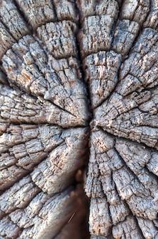 Треснувшие и обветренные деревянные бревна приклада. крупным планом