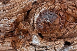 Cracked beachwood texture   hdr  damaged