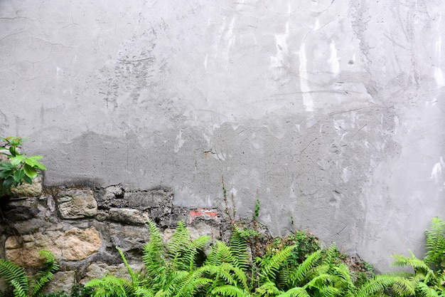 Cracked concrete wall texture background with the green sword fern