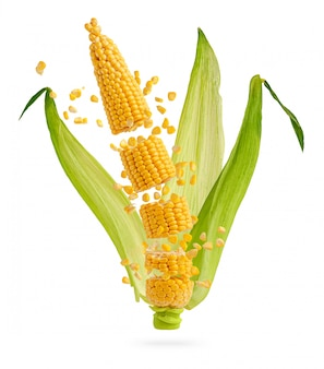 Cracked corn cob with flying grains and leaves isolated on white. flying food concept.