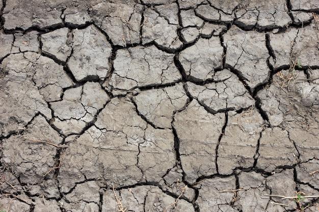 Cracked crust, dried lake.