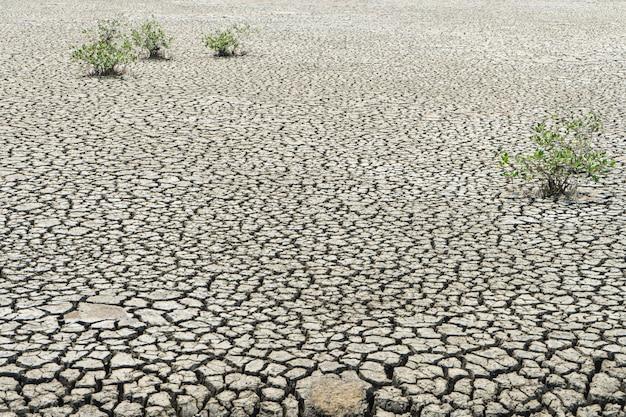 ひびの入った乾燥地の背景