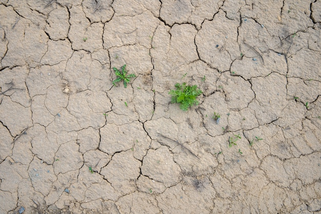 Cracked dried up soil, drought background