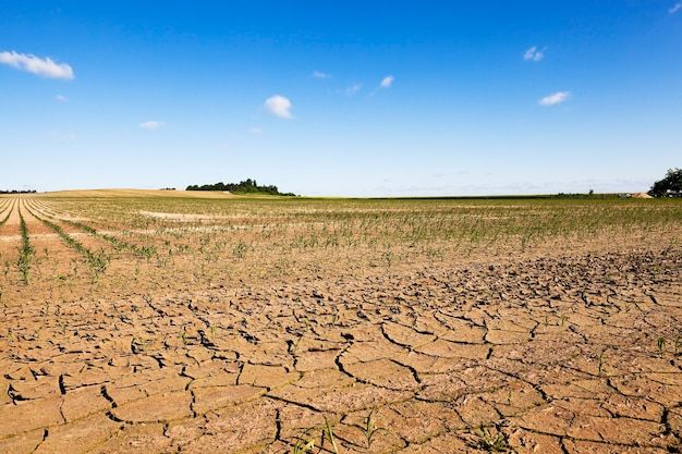 彼らがトウモロコシを育てる畑の水不足のためにひびの入った地球。