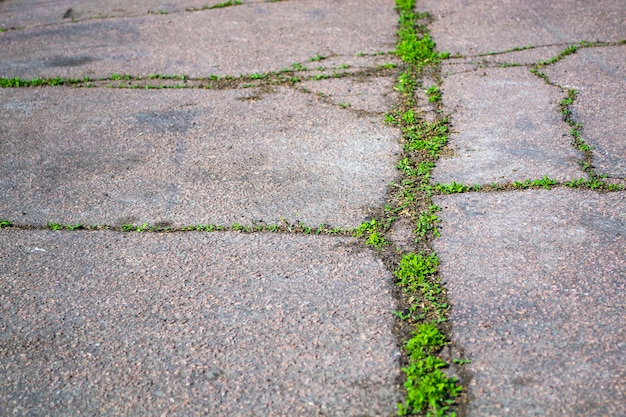 ひびの入った高速道路とアスファルト道路の新生活コンセプトによる緑の芽の成長
