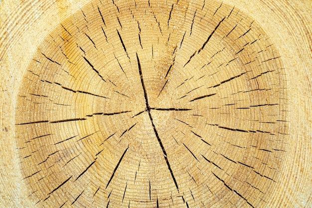 ひびの入った木の質感。ウッドリング。天然木の背景。