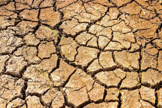 Cracks in the dried soil in arid season