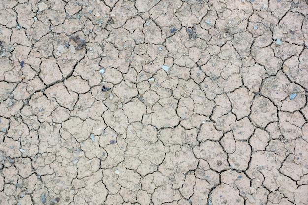 Cracks in the dried soil.