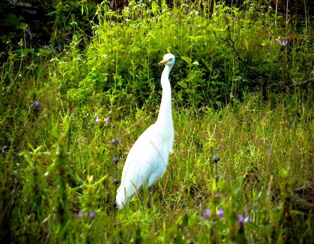 Crane_bird