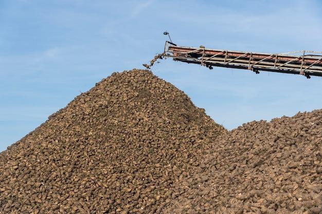 甜菜を降ろすコンバインのクレーンコンベア。農地で働く収穫機。農業機械。テンサイの塊茎をトラックから地面に降ろすクレーンコンベヤー