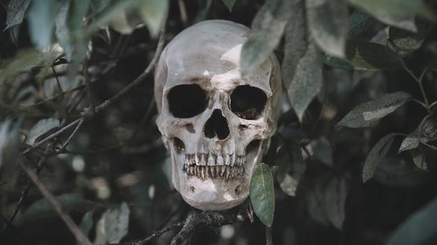 Cranium placed on twigs