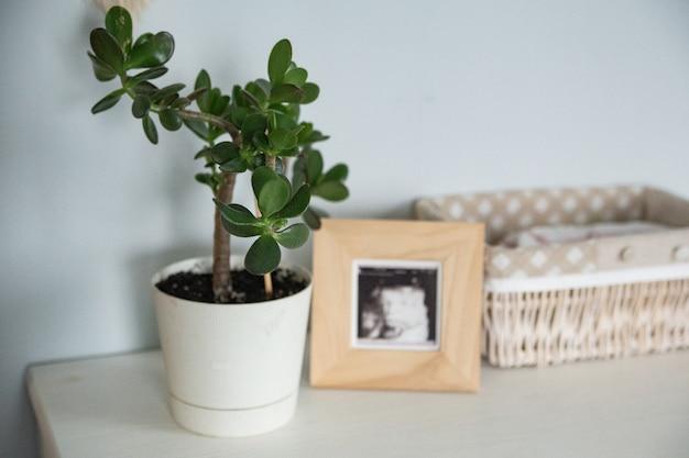나무 프레임 조명과 에코 미니멀리즘 개념이 있는 보육원의 크라술라 꽃