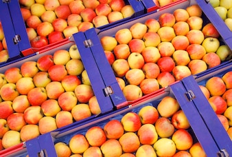 Crates of fresh apples