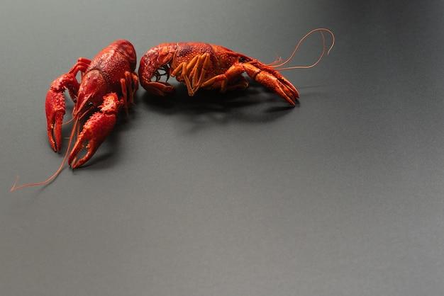 Crayfish red, baby lobster portrait on black background