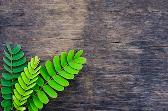 Creative 3 green tamarind leaves lay down on old wooden table for copy space background