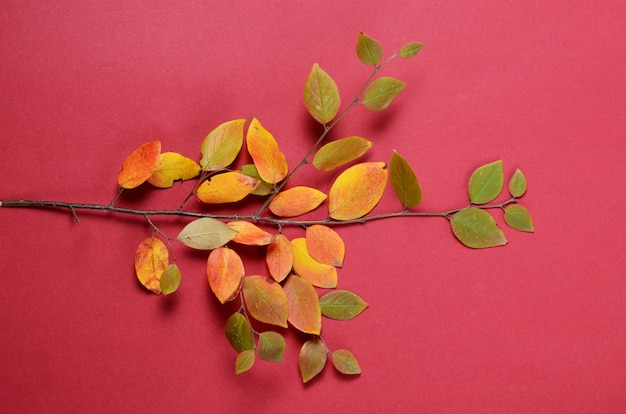 Creative autumn composition. tree branch and yellow leaves on a red background.