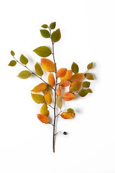 Creative autumn composition. tree branch and yellow leaves on a white background.