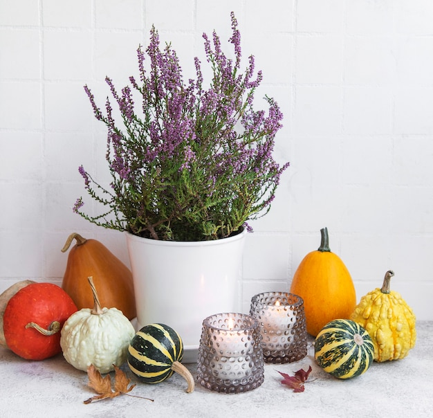 Creative autumn fall thanksgiving day composition with decorative orange pumpkins, candles and purple heather.