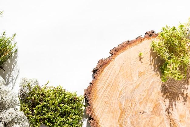 Творческий фон из природных лесных материалов - мох, ствол дерева, шишки, листья, кора дерева на белом фоне.
