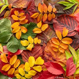 自然の創造的な背景。黄色、赤、オレンジ、緑の葉。ミニマリズムスタイル。