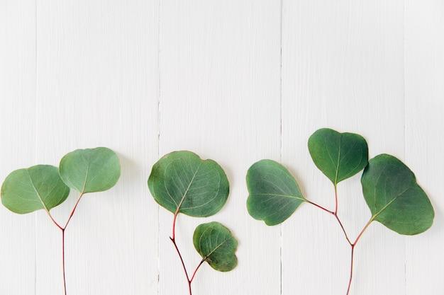 緑の葉の創造的な構成。白い木製の背景。葉フレーム。フラットlay。モックアップ