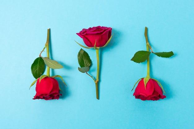Творческий состав цветов красной розы на синем фоне.