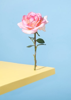Creative composition on pastel blue background. rose stands and balances on the edge of the table.