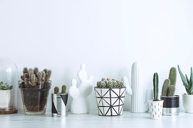 Creative composition in scandinavian style plants love concept white walls copy space template