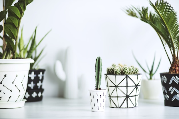 Creative composition in scandinavian style with cacti, plam tree and plants in hipster ornament designed pots on the white desk. plants love concept.