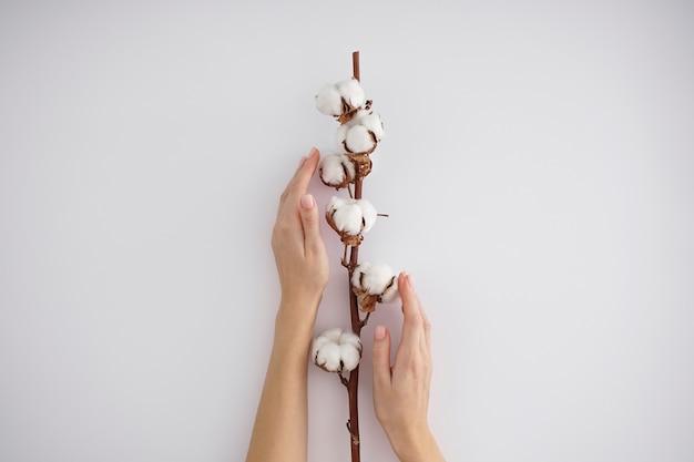 綿を使ったクリエイティブな構成。白い背景に綿の枝を持つ若い女性の手。女性のマニキュア。綿の花。