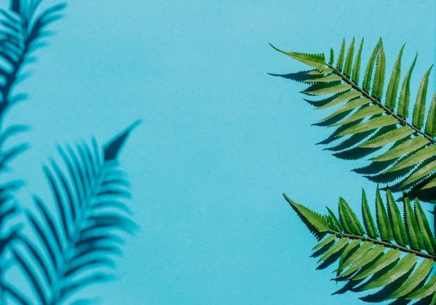 Creative composition with fern leaves