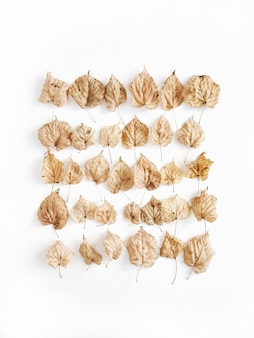 A creative composition with yellow dried leaves lying on white