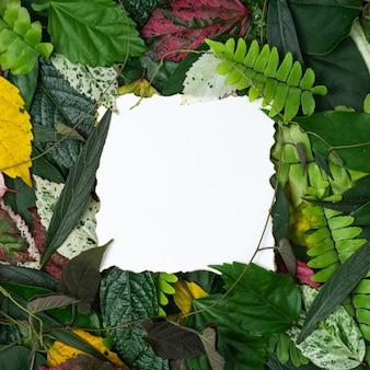 창조적 인 개념 여러 가지 빛깔의 종이 카드 메모와 함께 나뭇잎.