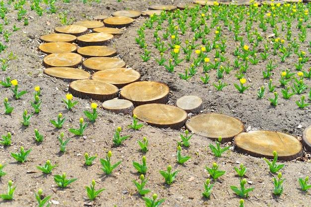 Креативный дизайн деревянной дорожки из нарезанного кружками ствола дерева