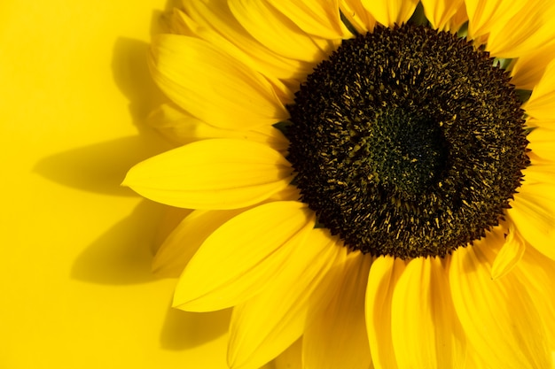 Creative design with sunflower and petals on yellow background