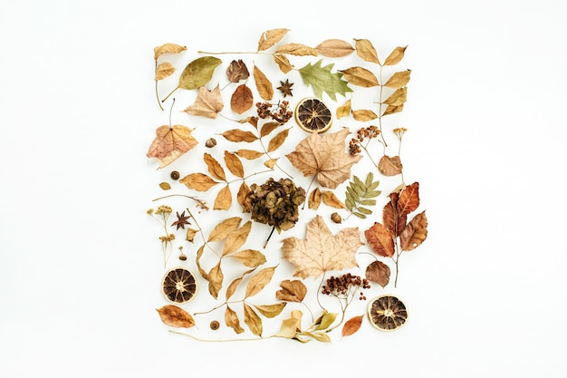Creative fall composition with dry autumn leaves on white surface