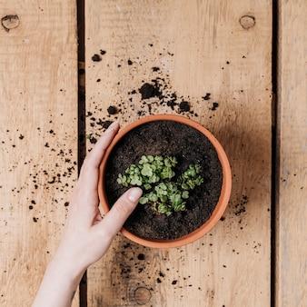 Creative flat lay gardening concept