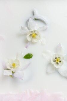 創造的な花の背景オダマキとカップの花がミルクコピースペースに浮かんでいますトップビューセレクティブフォーカス