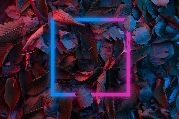 Creative fluorescent color layout made of tropical leaves. flat lay neon colors.neon light flat square frame on different leaves background in dark neon color palette.nature concept design