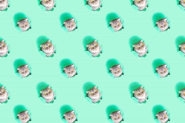 창의적인 재미있는 패턴. 녹색 종이의 구멍에 회색 스코틀랜드 배 고양이의 얼굴. 호기심 많은 장난 꾸러기 귀여운 애완 동물. 최소한의 개념. 까꿍